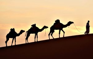 A man walks on a sand dune with his came...A man walks on a sand dune with his camels in Mhamid el-Ghizlane, in the Moroccan southern Sahara desert, on March 16, 2014. AFP PHOTO/FADEL SENNAFADEL SENNA/AFP/Getty Images