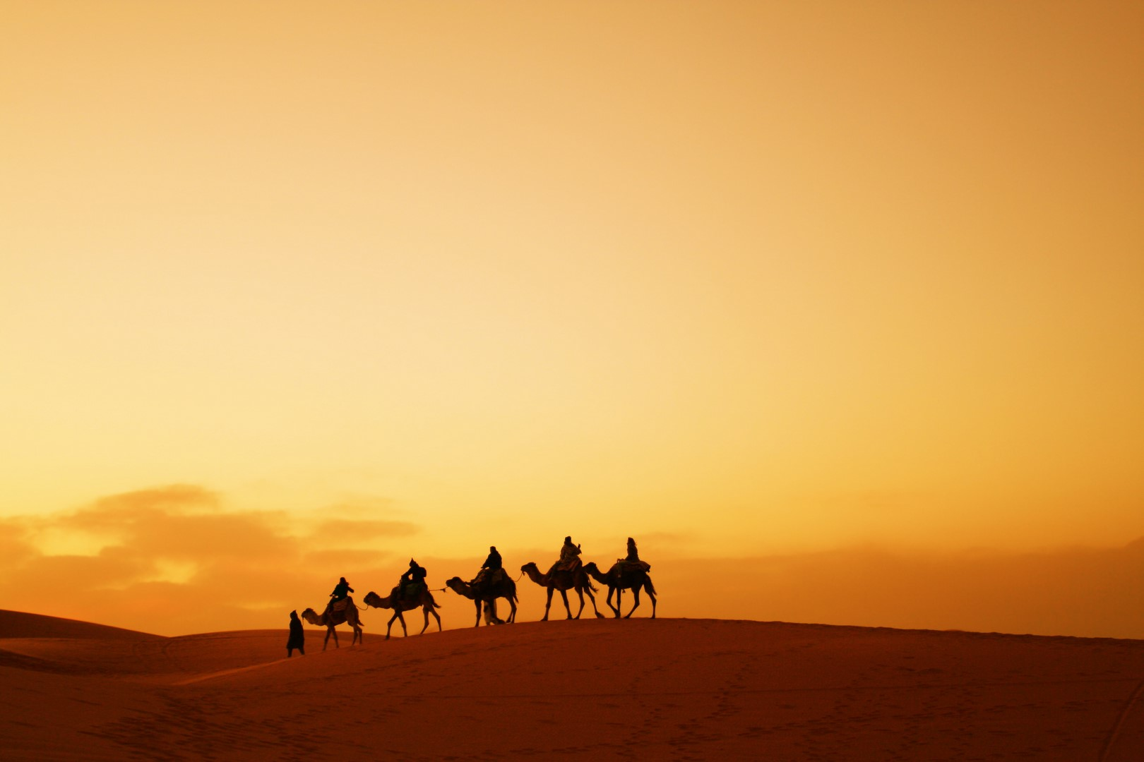 Morocco-camels (Copy)
