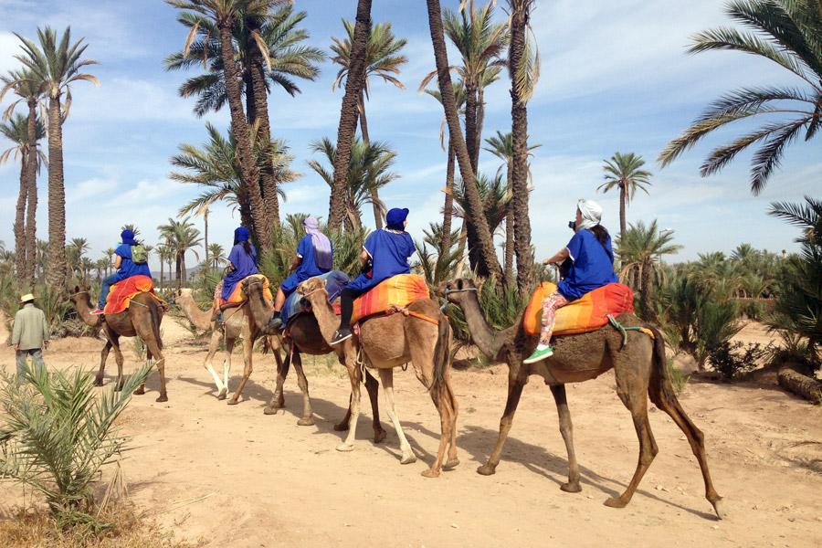 camellos-marrakech
